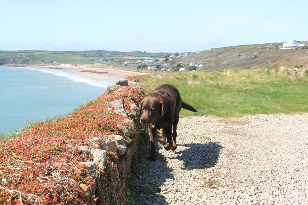 Dog friendly cottages from Stylish Cornish Cottages