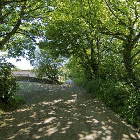 Country lane near The Little Barn