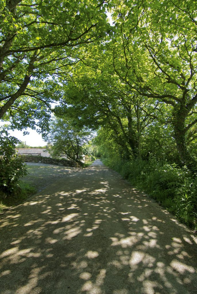 Country lane near The Little Barn
